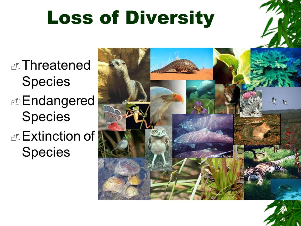 Loss of Diversity  Threatened Species  Endangered Species  Extinction of Species
