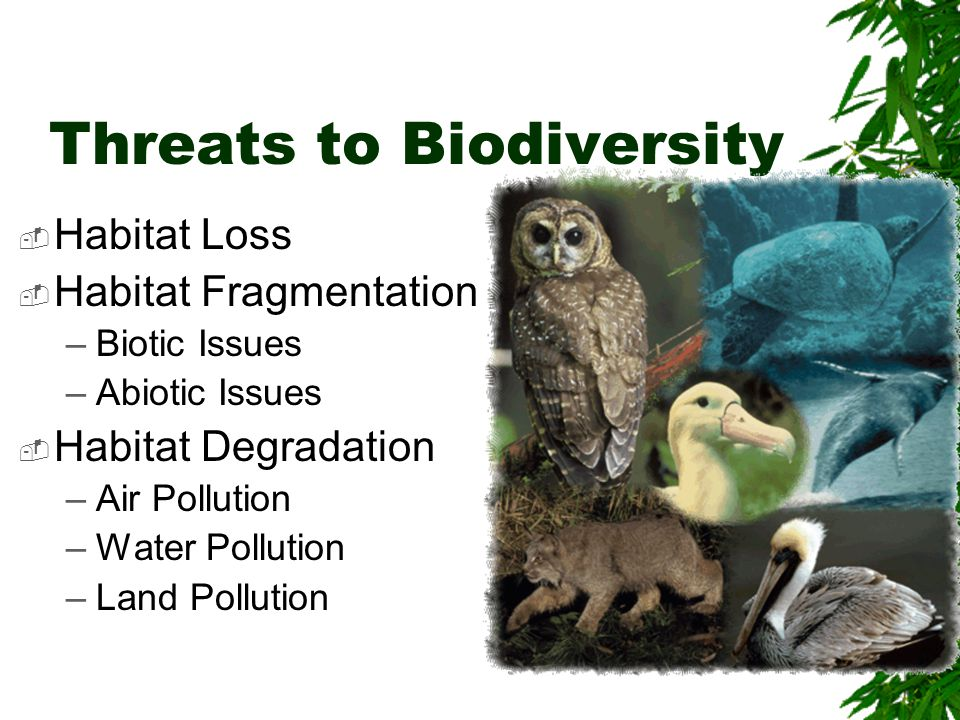 Threats to Biodiversity  Habitat Loss  Habitat Fragmentation –Biotic Issues –Abiotic Issues  Habitat Degradation –Air Pollution –Water Pollution –Land Pollution