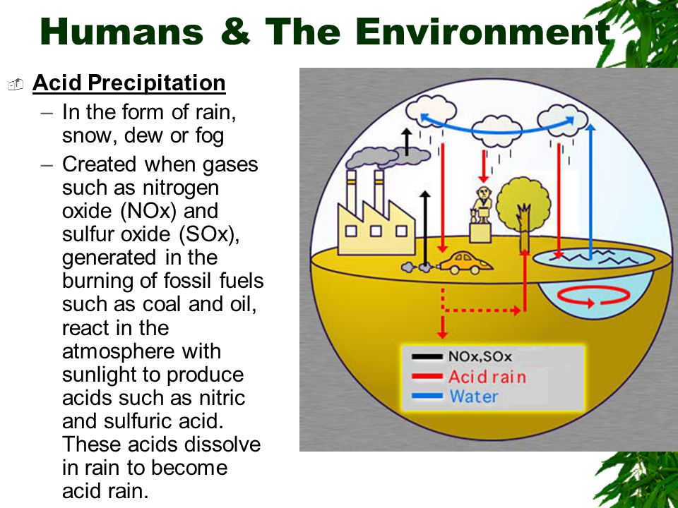 Humans & The Environment  Acid Precipitation –In the form of rain, snow, dew or fog –Created when gases such as nitrogen oxide (NOx) and sulfur oxide (SOx), generated in the burning of fossil fuels such as coal and oil, react in the atmosphere with sunlight to produce acids such as nitric and sulfuric acid.