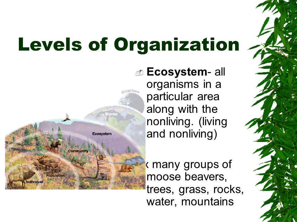 Levels of Organization  Ecosystem- all organisms in a particular area along with the nonliving.
