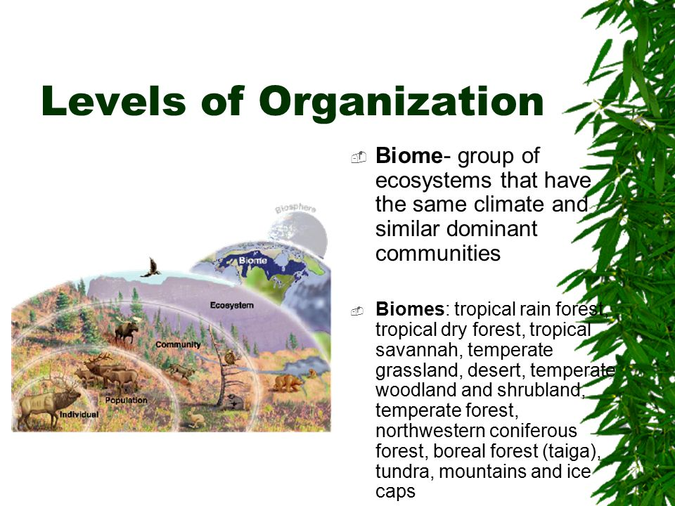 Levels of Organization  Biome- group of ecosystems that have the same climate and similar dominant communities  Biomes: tropical rain forest, tropical dry forest, tropical savannah, temperate grassland, desert, temperate woodland and shrubland, temperate forest, northwestern coniferous forest, boreal forest (taiga), tundra, mountains and ice caps