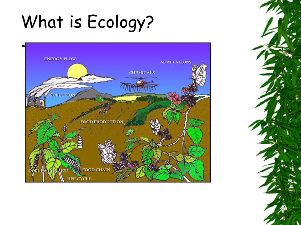 What is Ecology The