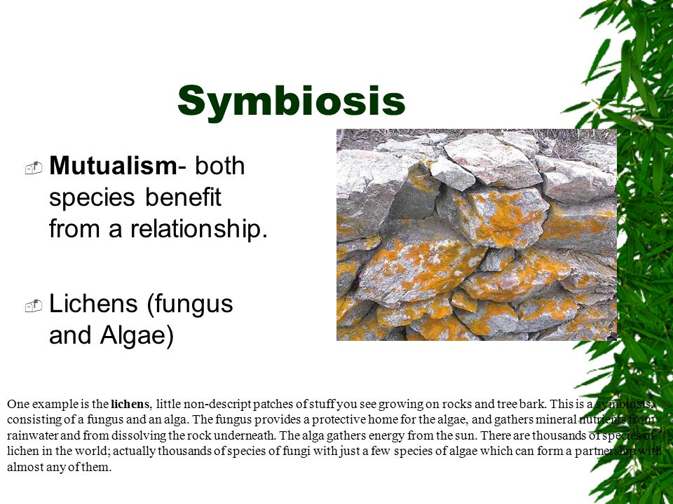 Symbiosis  Mutualism- both species benefit from a relationship.