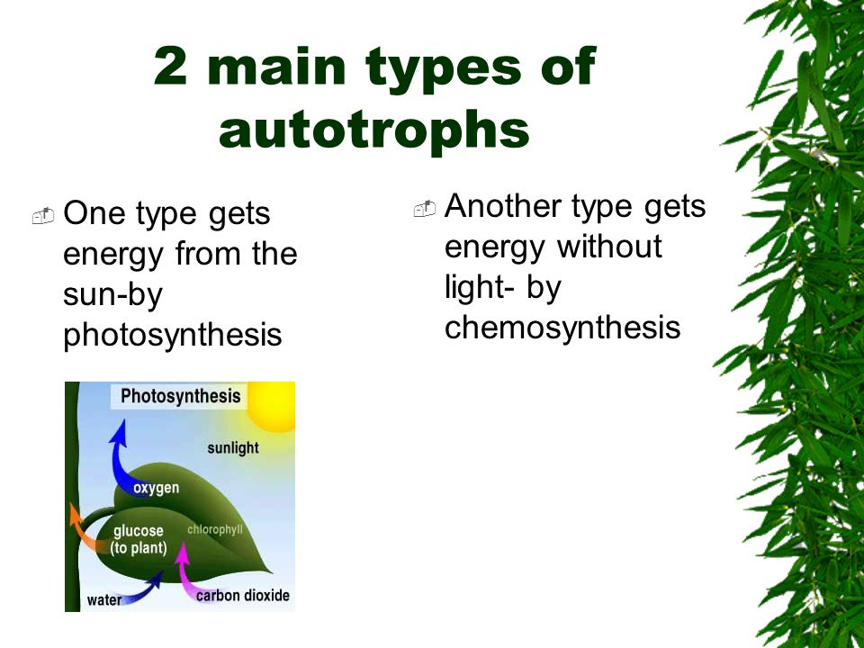 2 main types of autotrophs  One type gets energy from the sun-by photosynthesis  Another type gets energy without light- by chemosynthesis