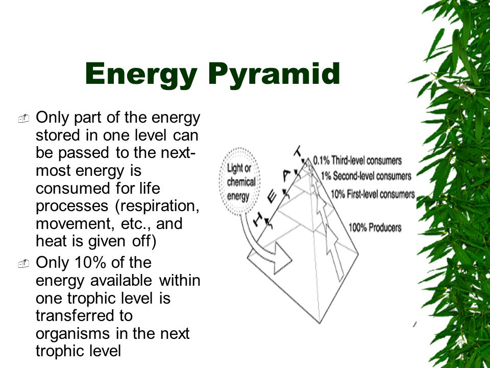 Energy Pyramid  Only part of the energy stored in one level can be passed to the next- most energy is consumed for life processes (respiration, movement, etc., and heat is given off)  Only 10% of the energy available within one trophic level is transferred to organisms in the next trophic level