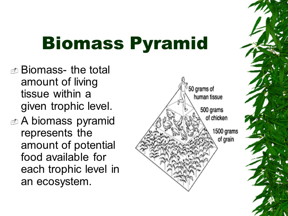 Biomass Pyramid  Biomass- the total amount of living tissue within a given trophic level.