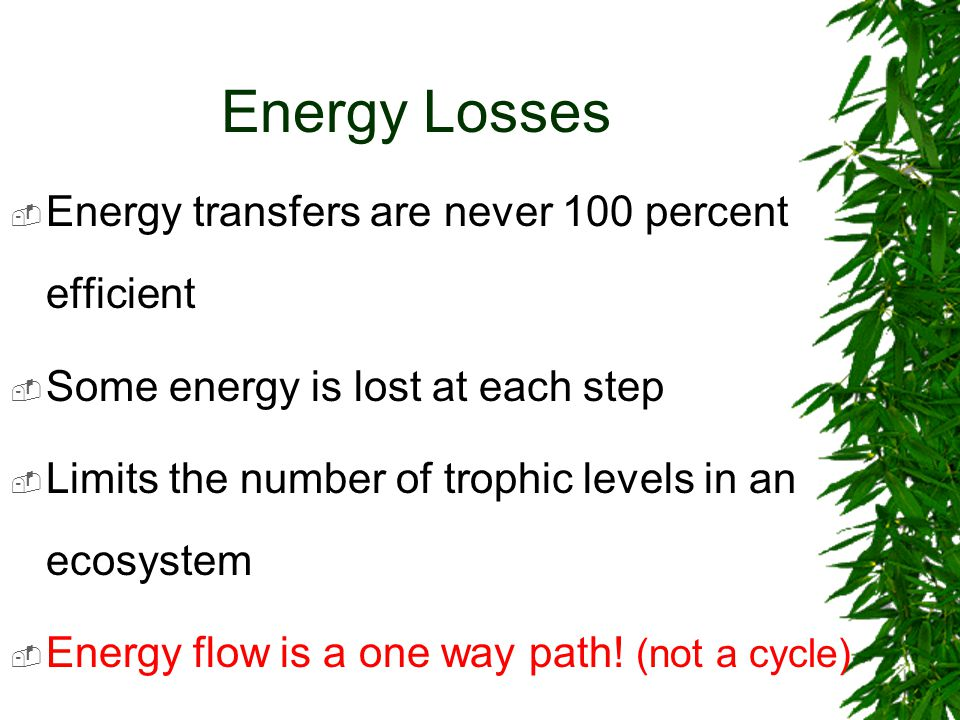Energy Losses  Energy transfers are never 100 percent efficient  Some energy is lost at each step  Limits the number of trophic levels in an ecosystem  Energy flow is a one way path.