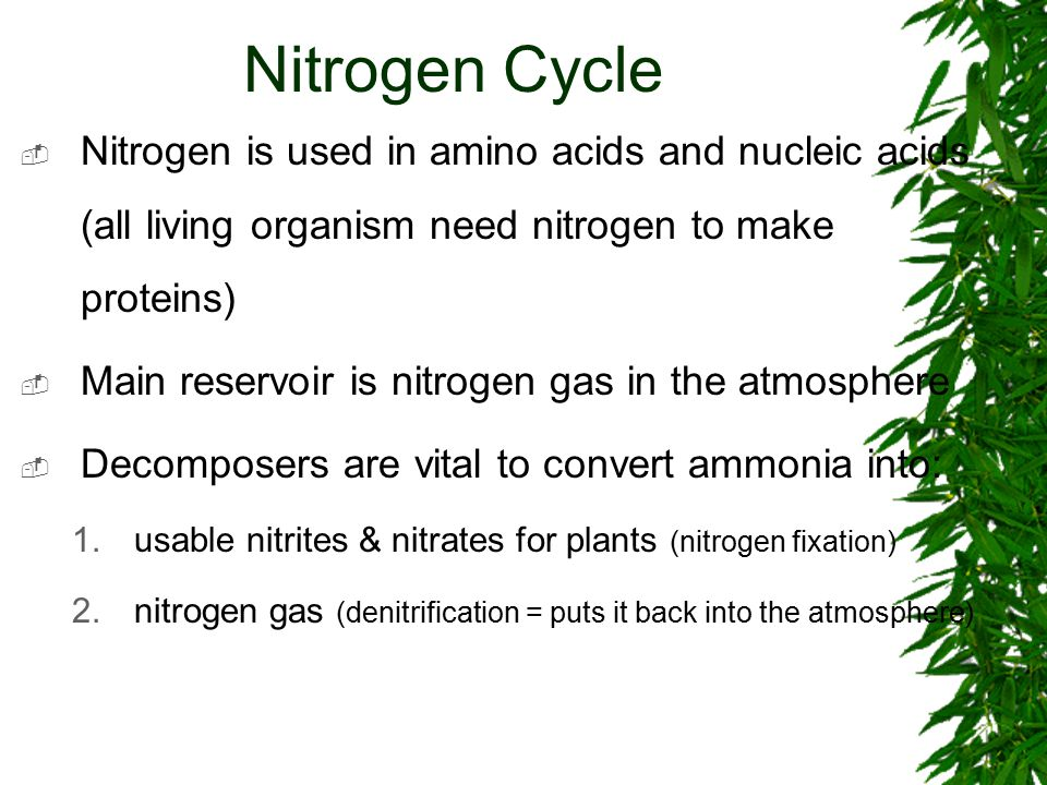Nitrogen Cycle  Nitrogen is used in amino acids and nucleic acids (all living organism need nitrogen to make proteins)  Main reservoir is nitrogen gas in the atmosphere  Decomposers are vital to convert ammonia into: 1.