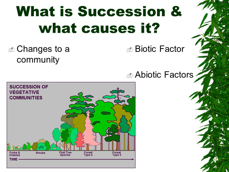 What is Succession & what causes it  Changes to a community  Biotic Factor  Abiotic Factors