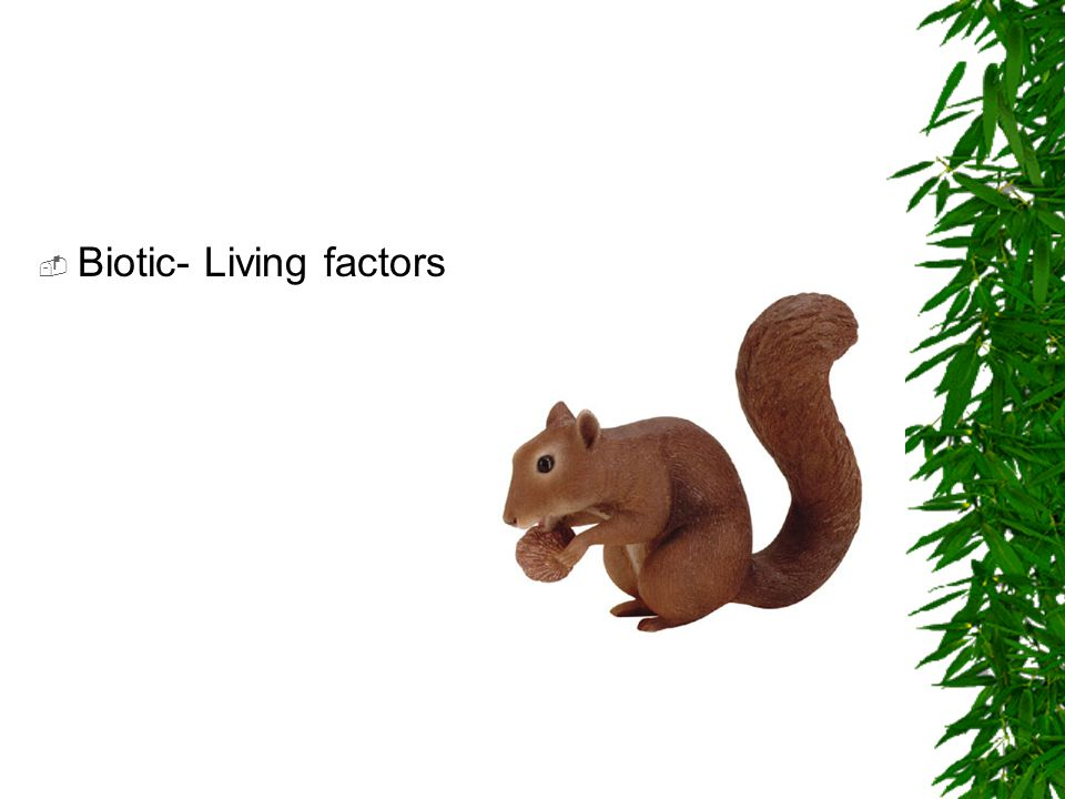  Biotic- Living factors