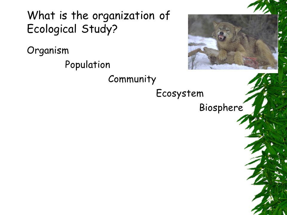 What is the organization of Ecological Study Population Community Ecosystem Biosphere Organism