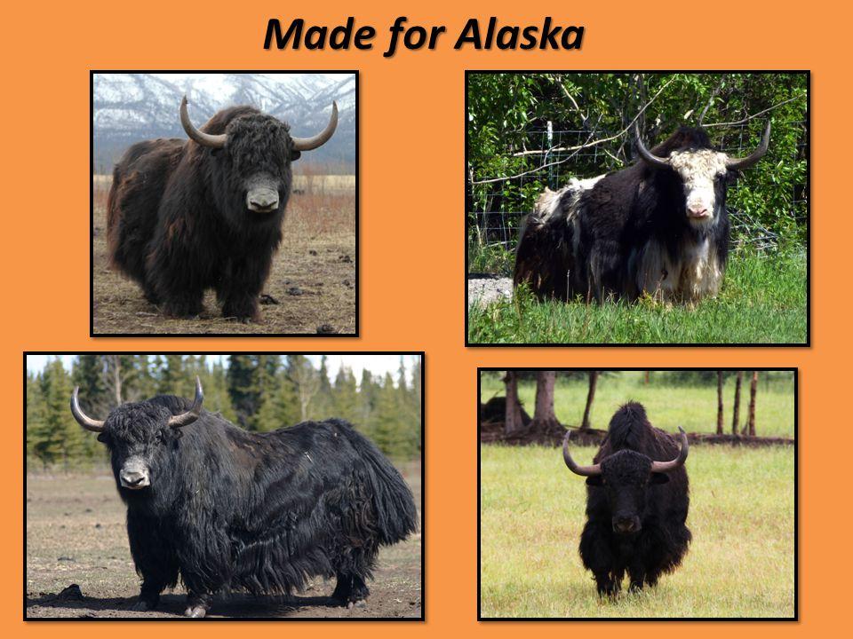 Made for Alaska