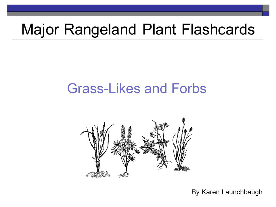 Grass-Likes and Forbs Major Rangeland Plant Flashcards By Karen Launchbaugh