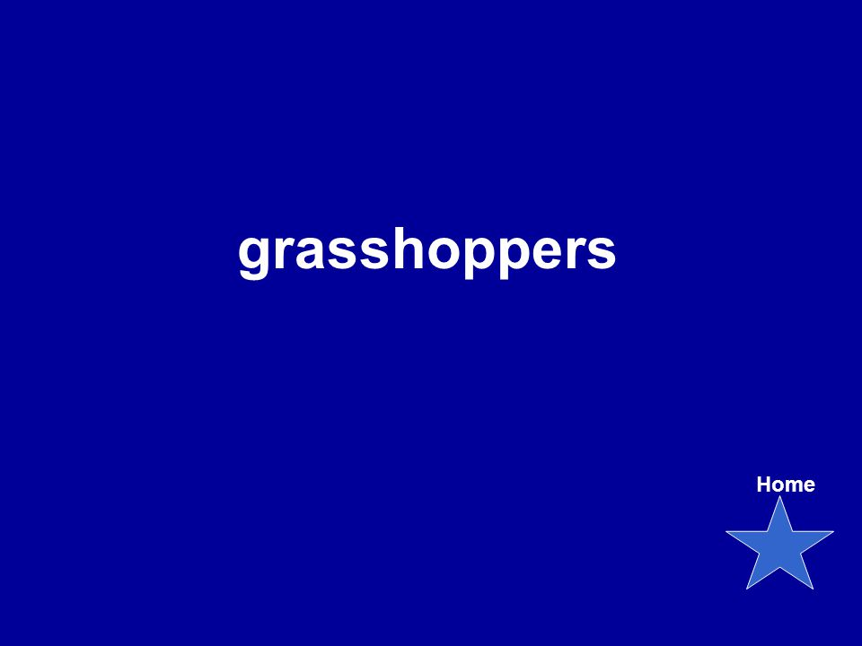 grasshoppers Home
