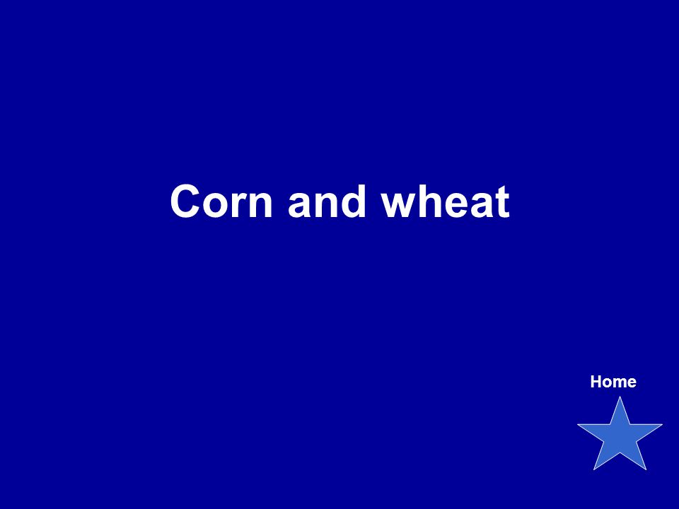 Corn and wheat Home