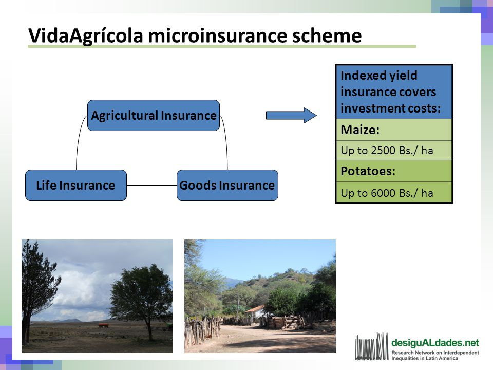 VidaAgrícola microinsurance scheme Agricultural Insurance Goods InsuranceLife Insurance Indexed yield insurance covers investment costs: Maize: Up to 2500 Bs./ ha Potatoes: Up to 6000 Bs./ ha