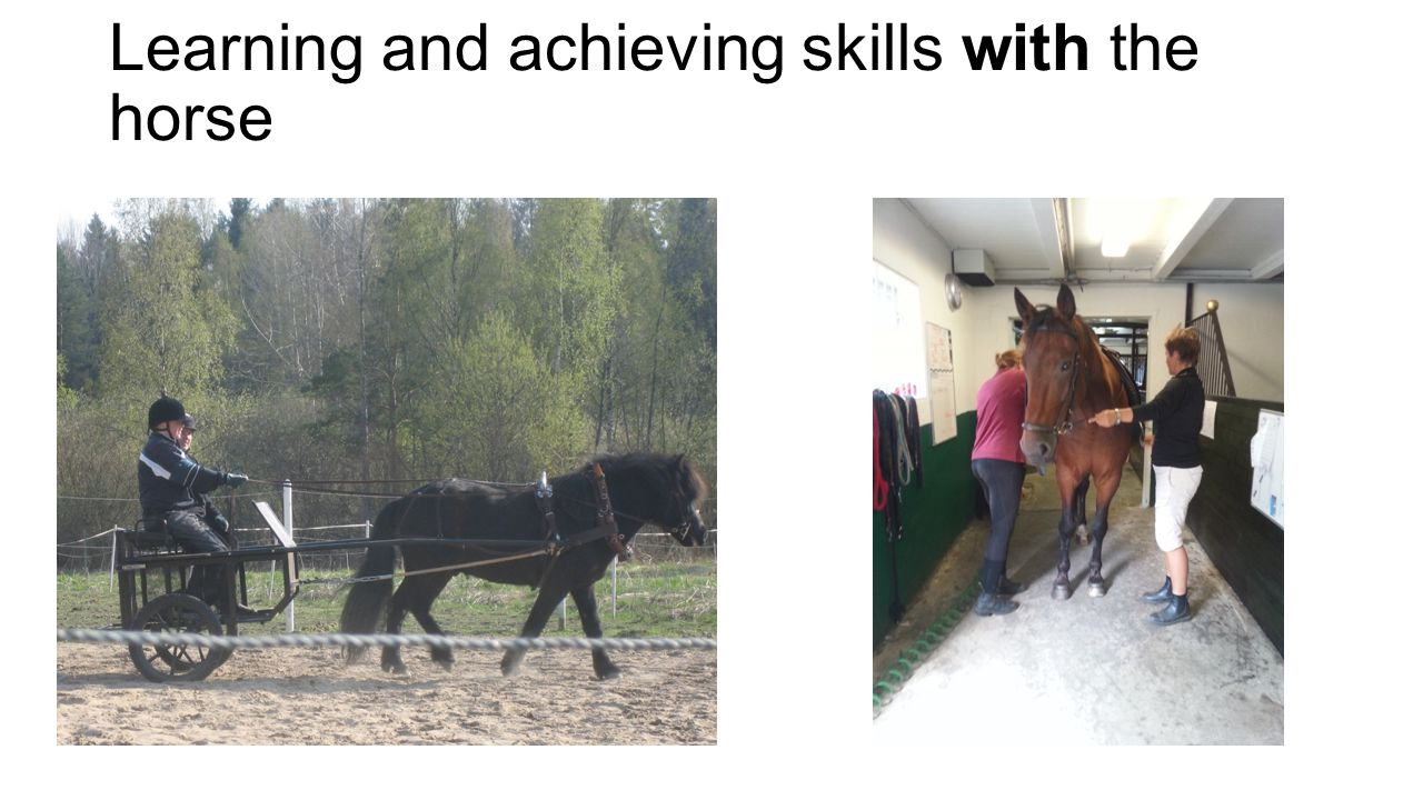 Learning and achieving skills with the horse
