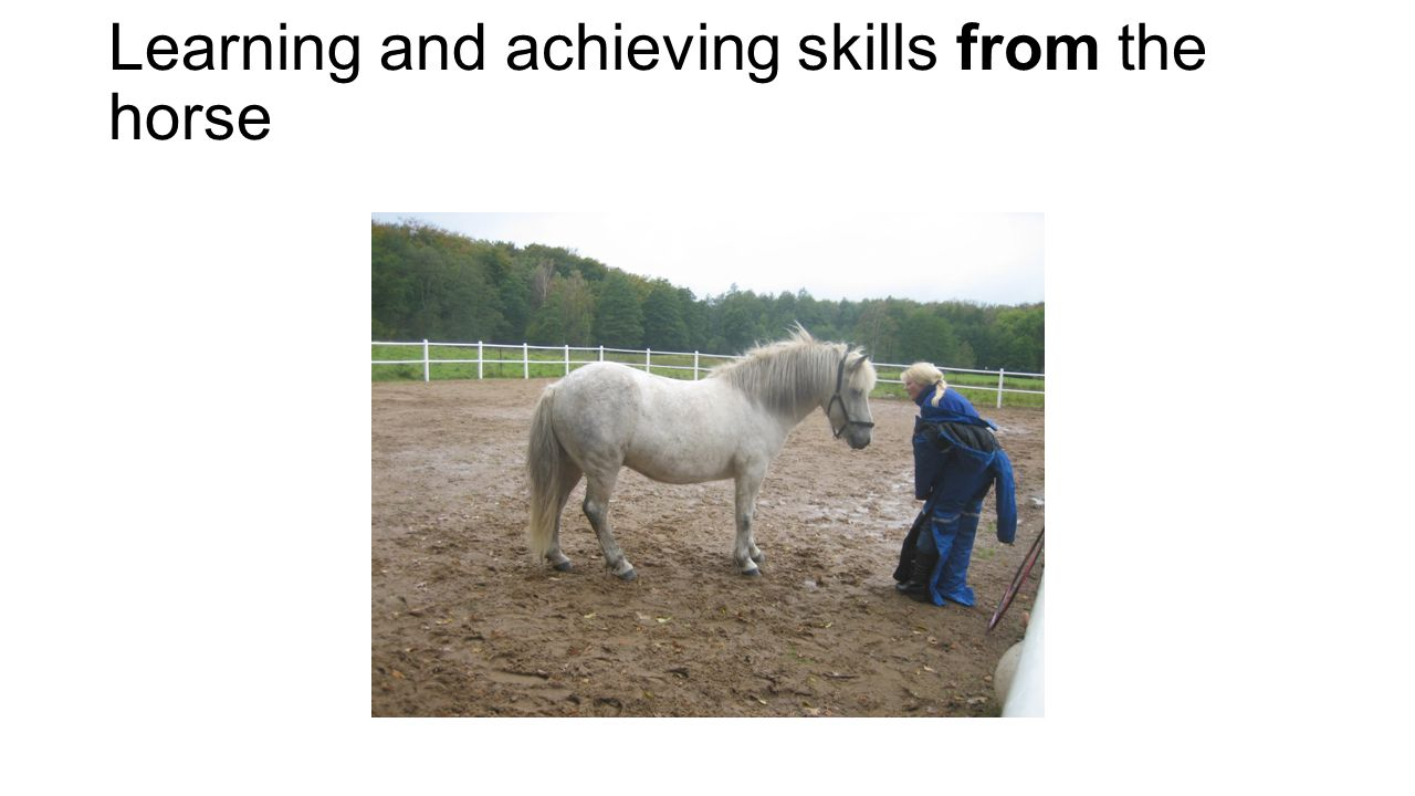 Learning and achieving skills from the horse