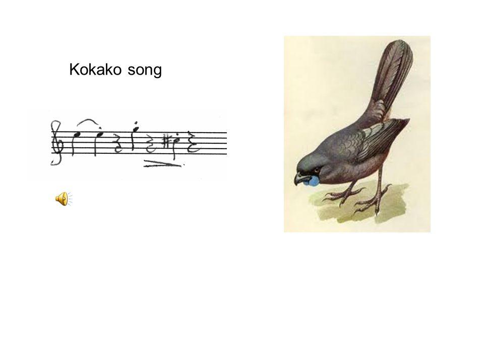 Kokako song