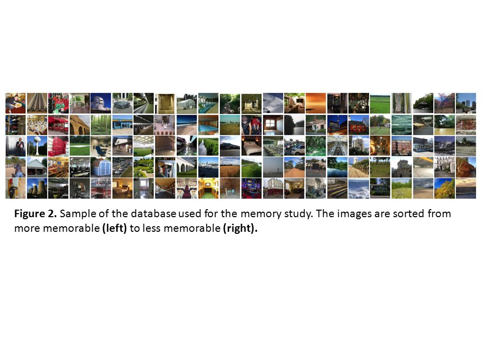 Figure 2. Sample of the database used for the memory study. The images are sorted from more memorable (left) to less memorable (right).