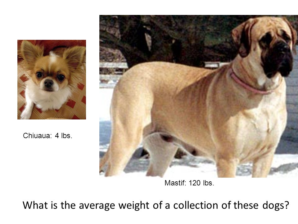Chiuaua: 4 lbs. Mastif: 120 lbs. What is the average weight of a collection of these dogs?