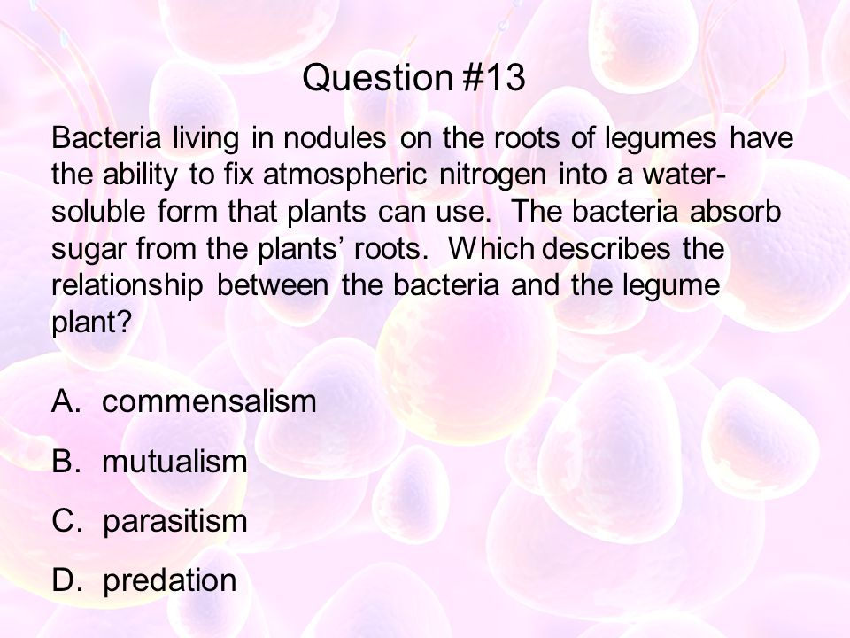 Bacteria living in nodules on the roots of legumes have the ability to fix atmospheric nitrogen into a water- soluble form that plants can use. The ba