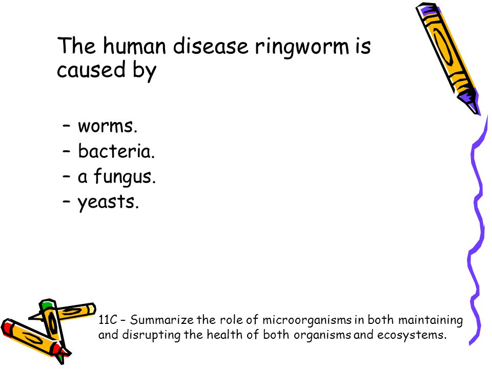 The human disease ringworm is caused by –worms. –bacteria. –a fungus. –yeasts. 11C – Summarize the role of microorganisms in both maintaining and disr