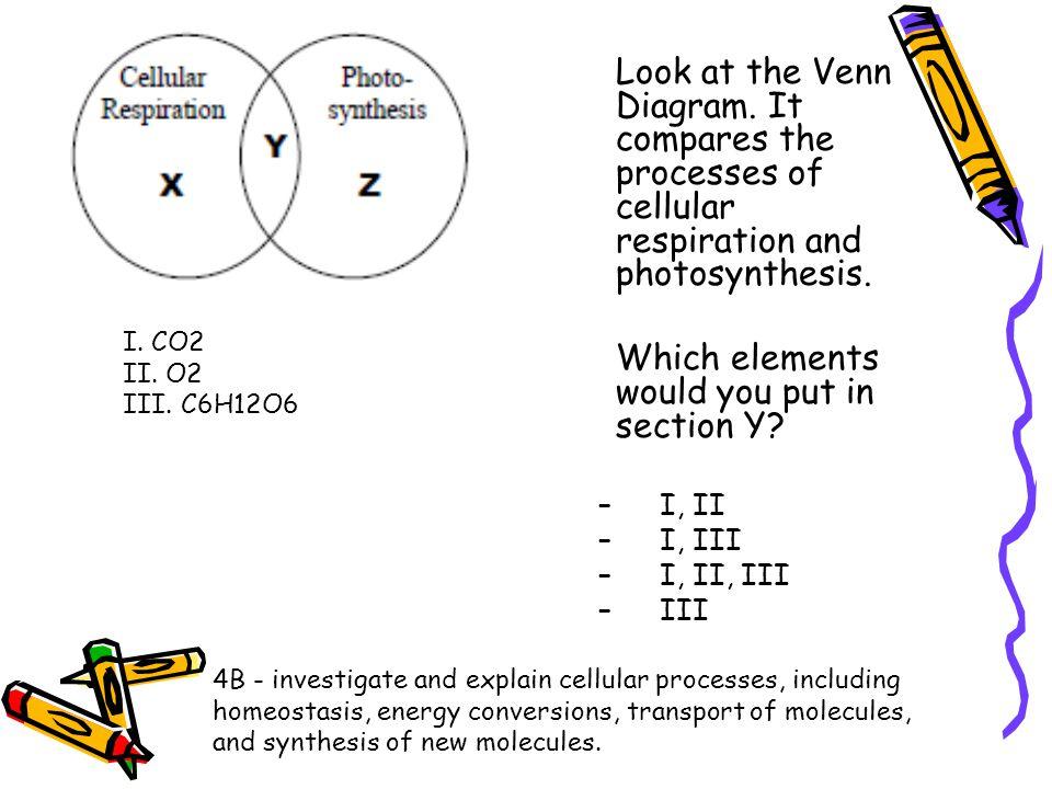 Photosynthesis Vs Cellular Respiration Venn Diagram 2018 Images