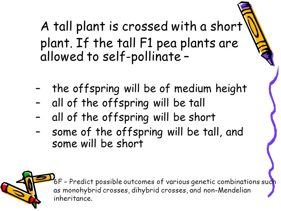 A tall plant is crossed with a short plant. If the tall F1 pea plants are allowed to self-pollinate – –the offspring will be of medium height –all of