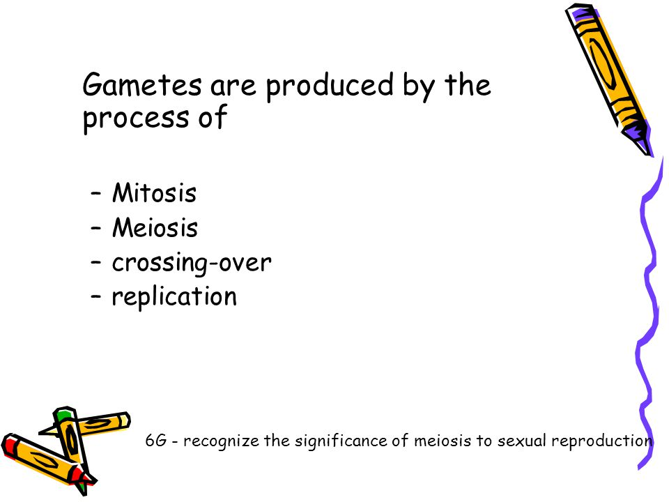 Gametes are produced by the process of –Mitosis –Meiosis –crossing-over –replication 6G - recognize the significance of meiosis to sexual reproduction