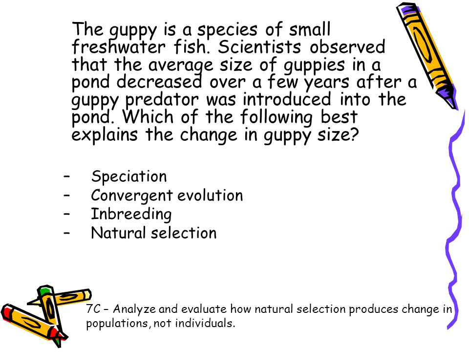 The guppy is a species of small freshwater fish. Scientists observed that the average size of guppies in a pond decreased over a few years after a gup