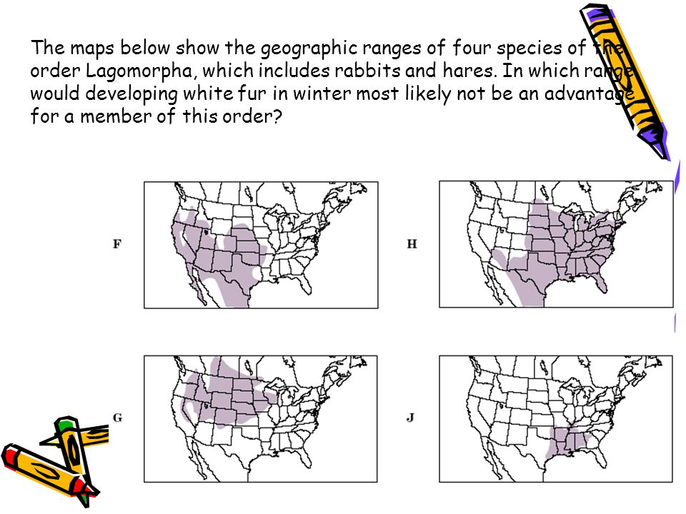 The maps below show the geographic ranges of four species of the order Lagomorpha, which includes rabbits and hares. In which range would developing w