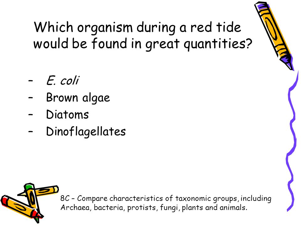 Which organism during a red tide would be found in great quantities? –E. coli –Brown algae –Diatoms –Dinoflagellates 8C – Compare characteristics of t