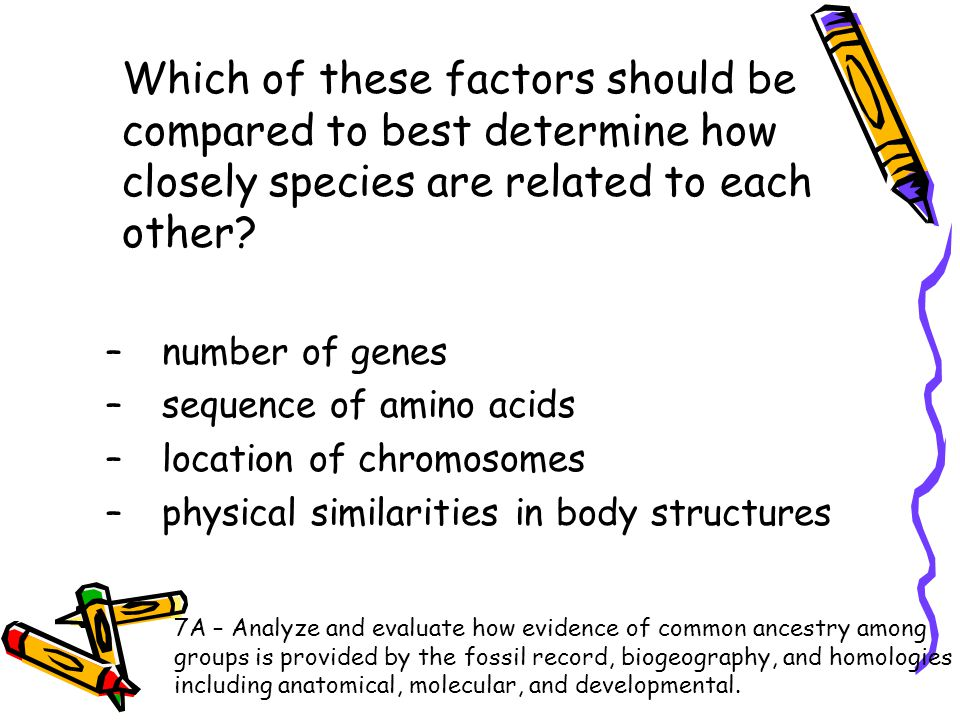 Which of these factors should be compared to best determine how closely species are related to each other? –number of genes –sequence of amino acids –