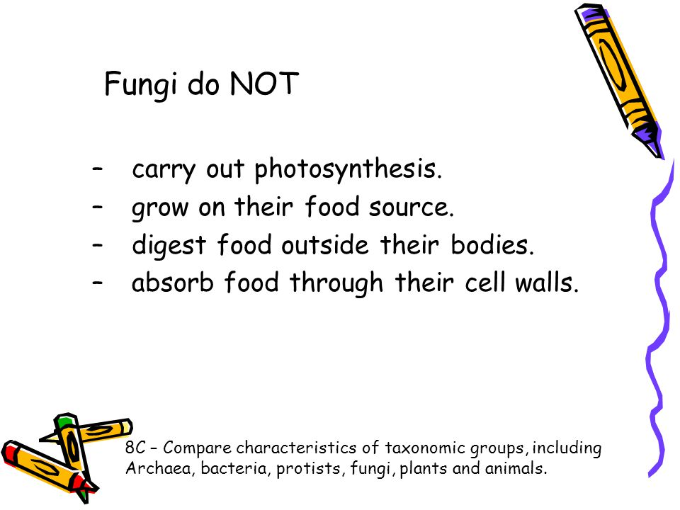 Fungi do NOT –carry out photosynthesis. –grow on their food source. –digest food outside their bodies. –absorb food through their cell walls. 8C – Com