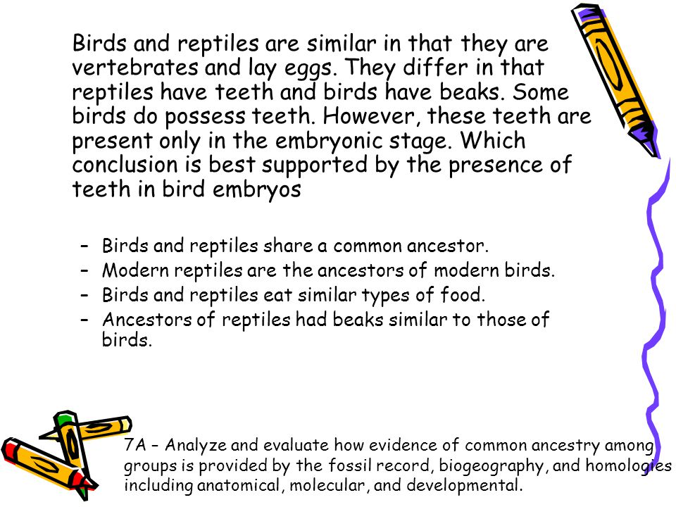 Birds and reptiles are similar in that they are vertebrates and lay eggs. They differ in that reptiles have teeth and birds have beaks. Some birds do