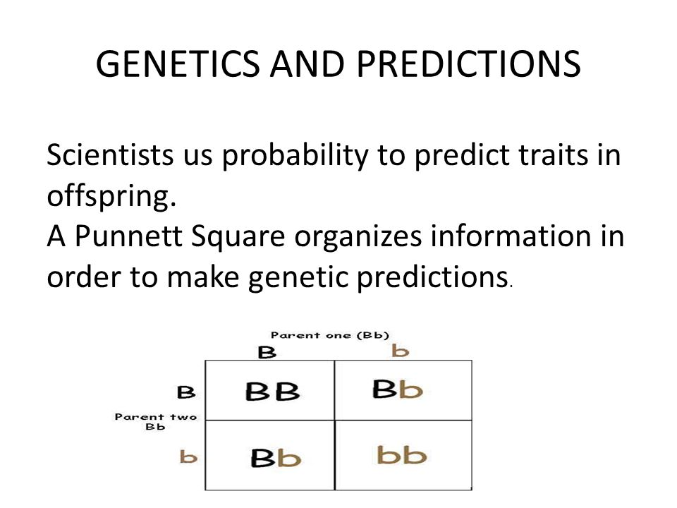 GENETICS AND PREDICTIONS Scientists us probability to predict traits in offspring. A Punnett Square organizes information in order to make genetic pre