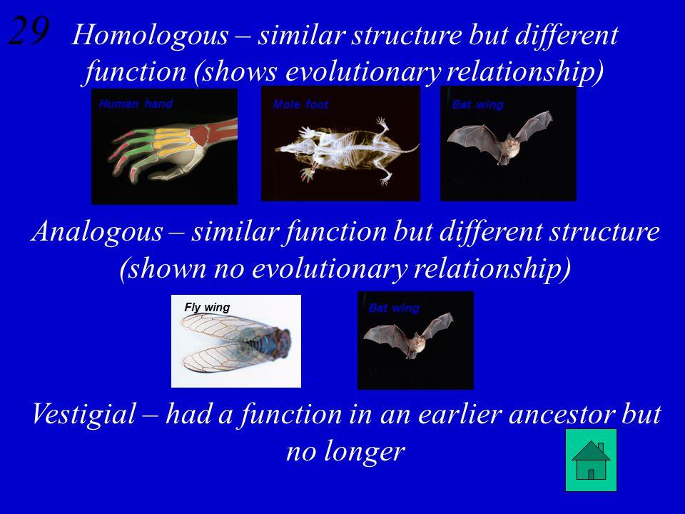 28 Differentiate between homologous, analogous, and vestigial structures