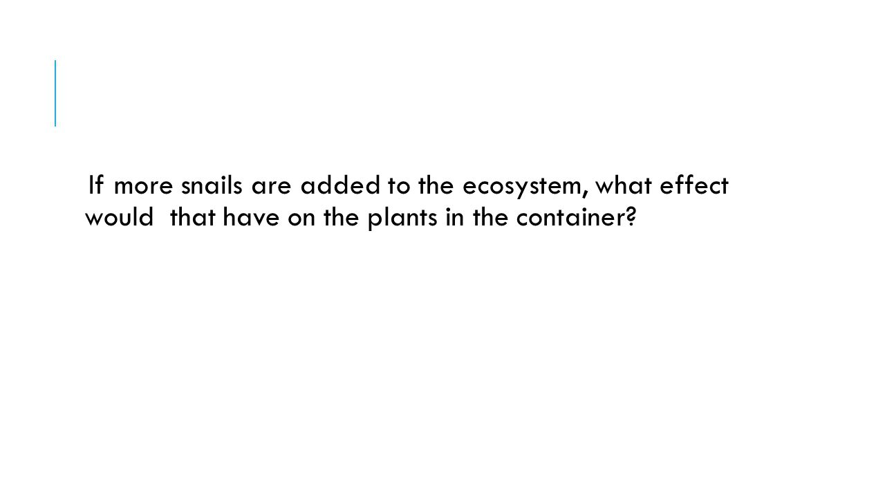 If more snails are added to the ecosystem, what effect would that have on the plants in the container?