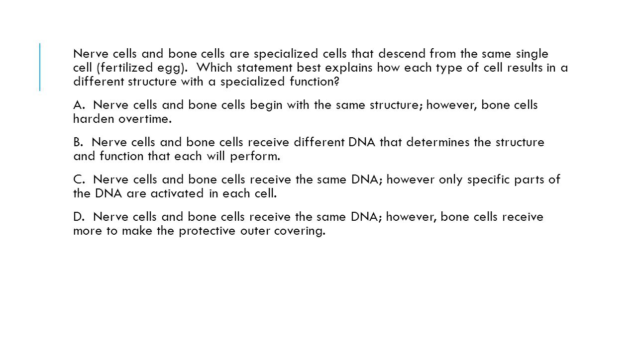 Nerve cells and bone cells are specialized cells that descend from the same single cell (fertilized egg). Which statement best explains how each type