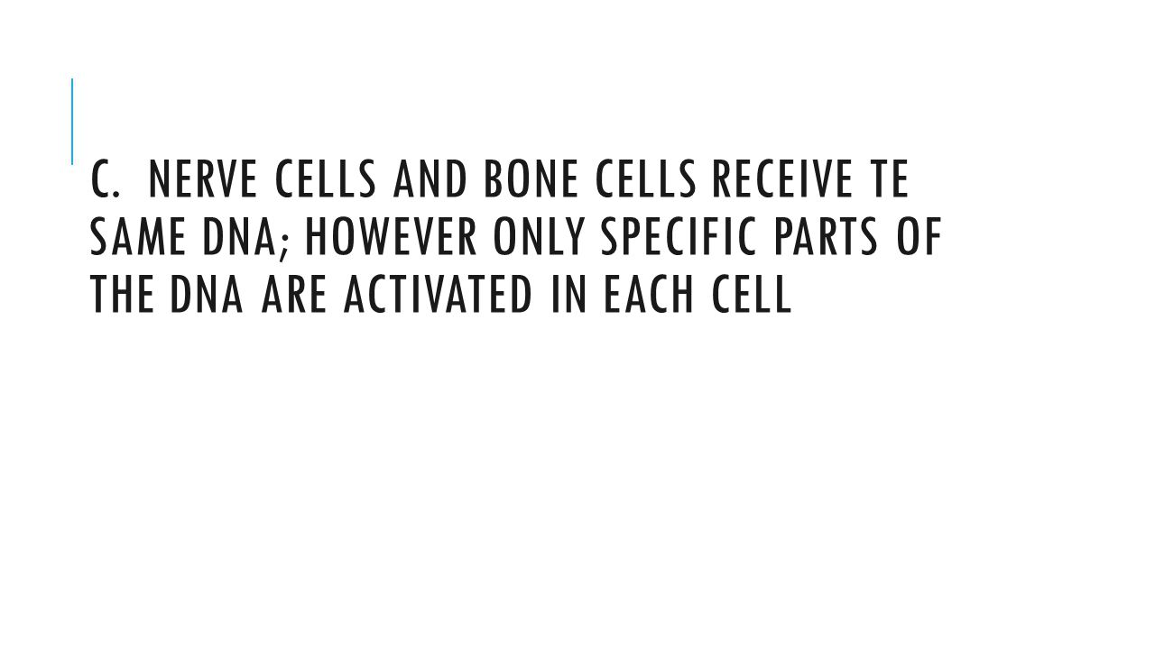 C. NERVE CELLS AND BONE CELLS RECEIVE TE SAME DNA; HOWEVER ONLY SPECIFIC PARTS OF THE DNA ARE ACTIVATED IN EACH CELL