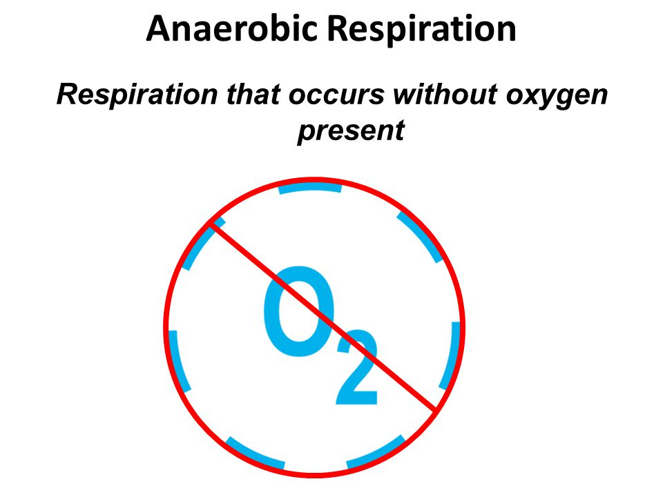 Anaerobic Respiration Respiration that occurs without oxygen present