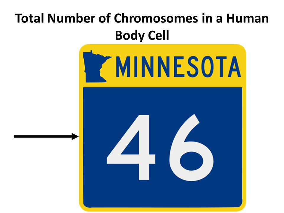 Total Number of Chromosomes in a Human Body Cell