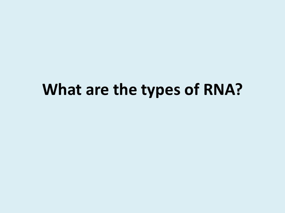 What are the types of RNA