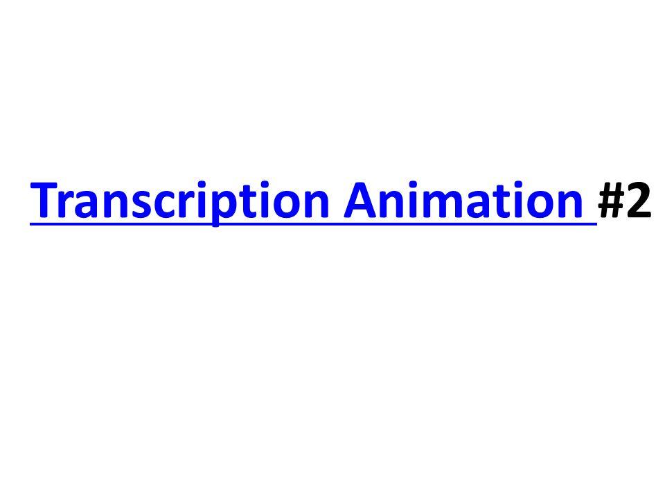 Transcription Animation Transcription Animation #2