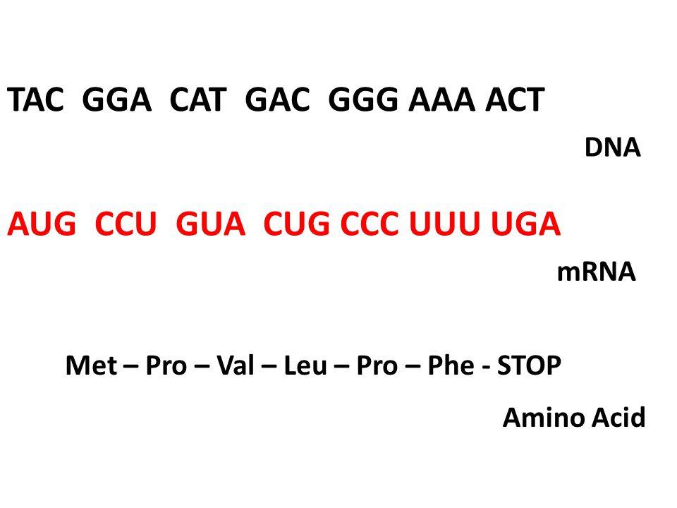 TAC GGA CAT GAC GGG AAA ACT AUG CCU GUA CUG CCC UUU UGA Met – Pro – Val – Leu – Pro – Phe - STOP DNA mRNA Amino Acid