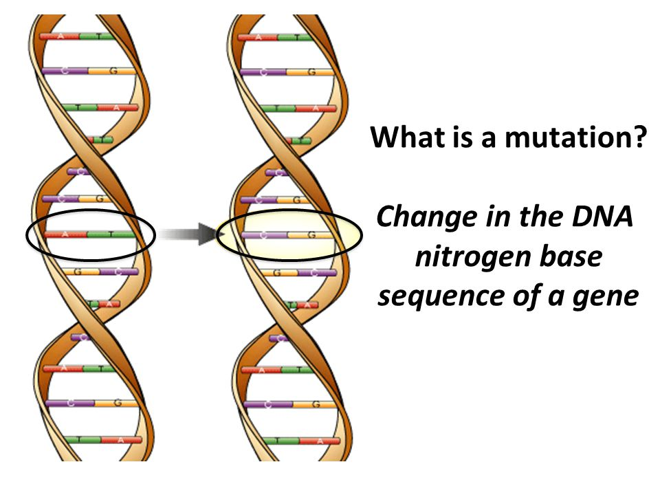 What is a mutation Change in the DNA nitrogen base sequence of a gene