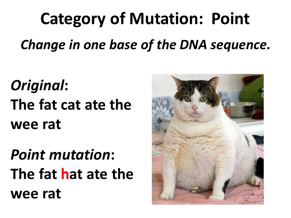 Category of Mutation: Point Change in one base of the DNA sequence.