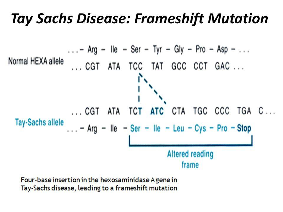 Tay Sachs Disease: Frameshift Mutation