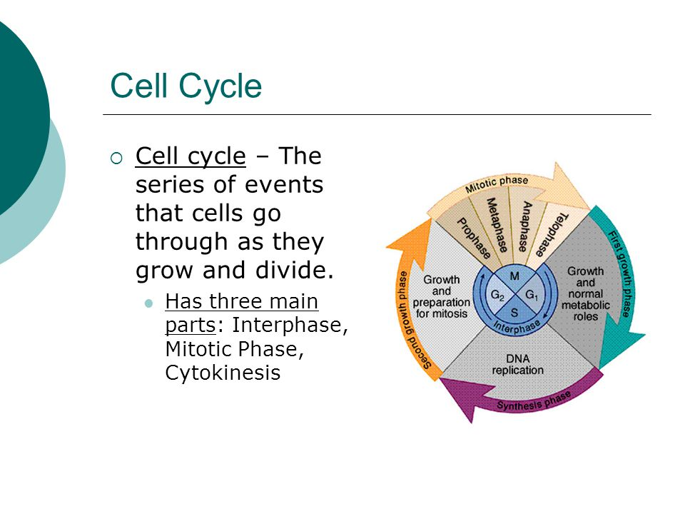 Cell Cycle  Cell cycle – The series of events that cells go through as they grow and divide. Has three main parts: Interphase, Mitotic Phase, Cytokin